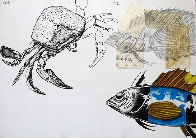 A* gcse art projects - drawings of crabs and fish