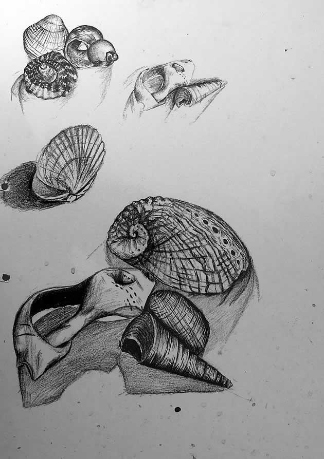 observational drawings in a GCSE art sketchbook