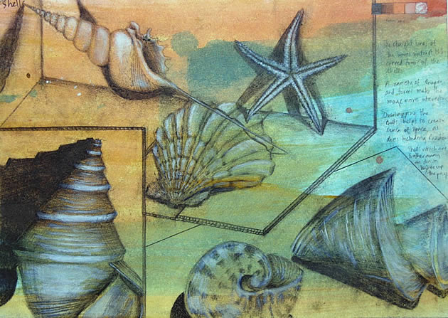igcse art sketchbook page - shells and natural forms
