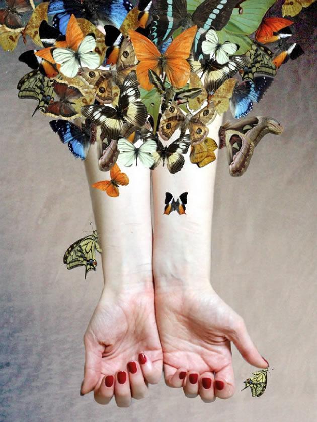 A Level Photography butterflies