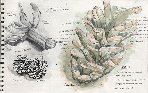 A Level Art sketchbook page exploring natural forms