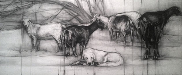 art by April Coppini - pencil drawings of sheep