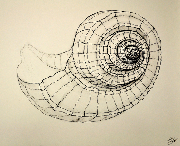 cross contour drawing of a shell