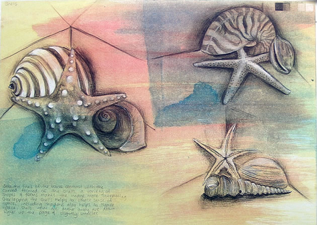 drawings of shells - gcse art sketchbook page