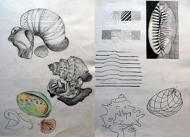 Line Drawing Natural Forms : An exceptional international gcse art sketchbook shells
