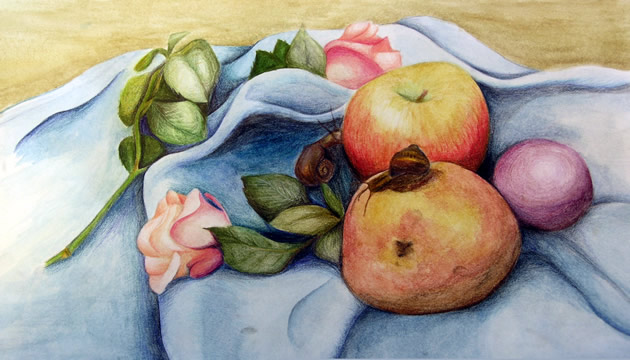 water colour pencil still life - an igcse art exam