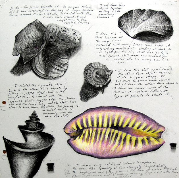 sketchbook of shell drawings