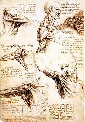 leonardo da vinci sketchbook page - shoulder drawings