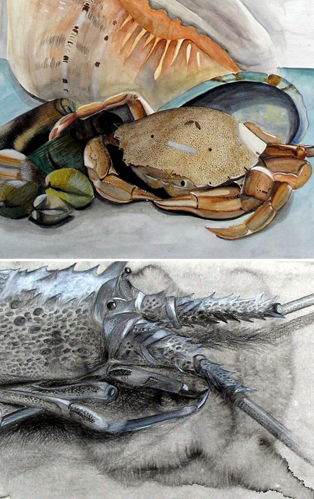drawing of crustaceans - IGCSE Art