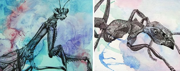 Art lesson: drawing insects