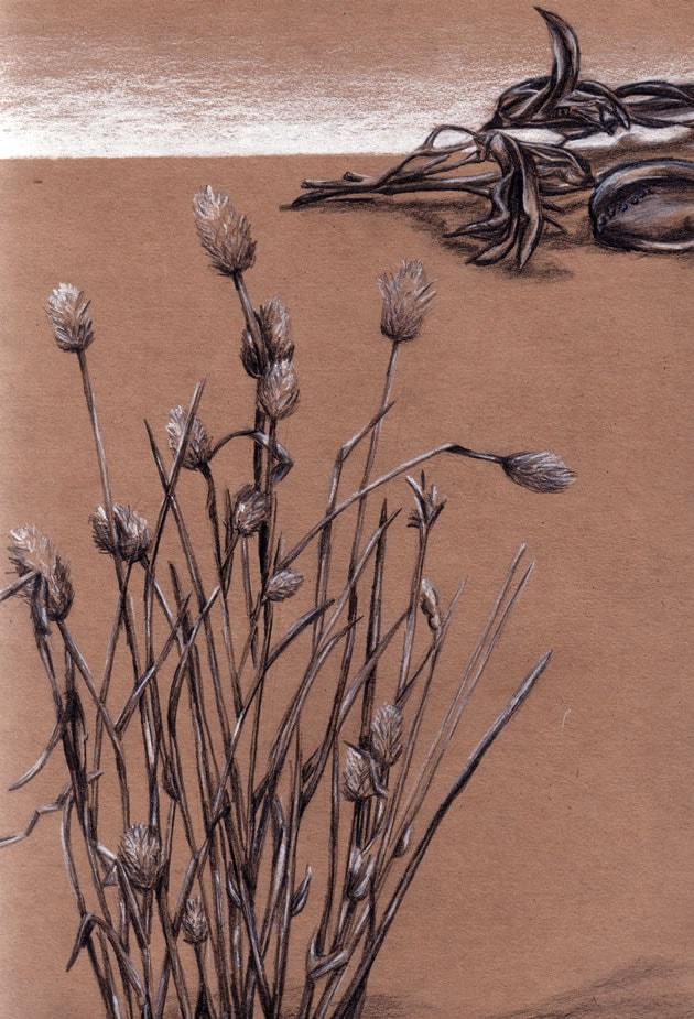 Seed pod drawings
