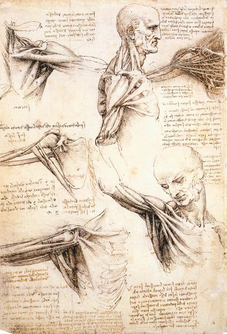da Vinci shoulder sketchbook