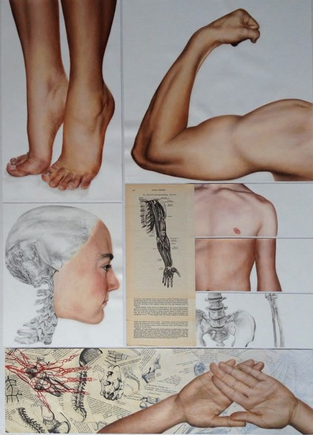 Study of the human body: A Level Art