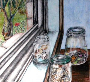 coloured pencil drawing of objects in jars