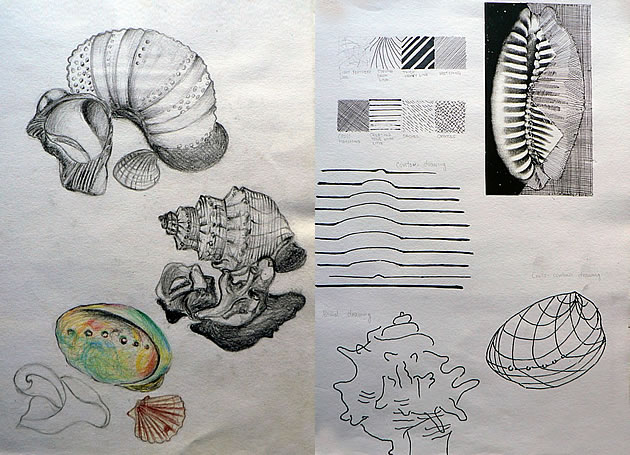 Gcse Art Sketchbook Shells on blind contour drawing