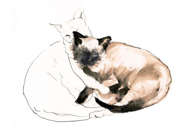 line drawing of cats