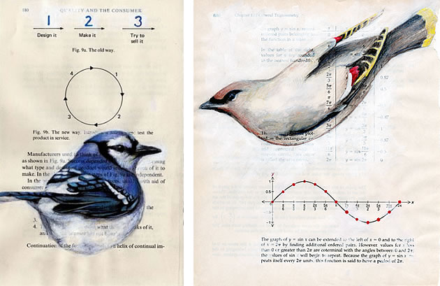 paula swisher drawings of birds on books