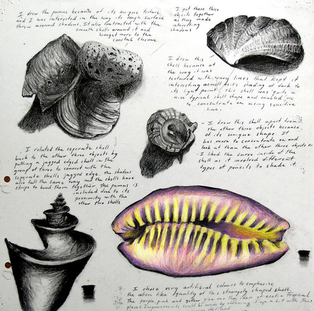 sketchbook of shell drawings