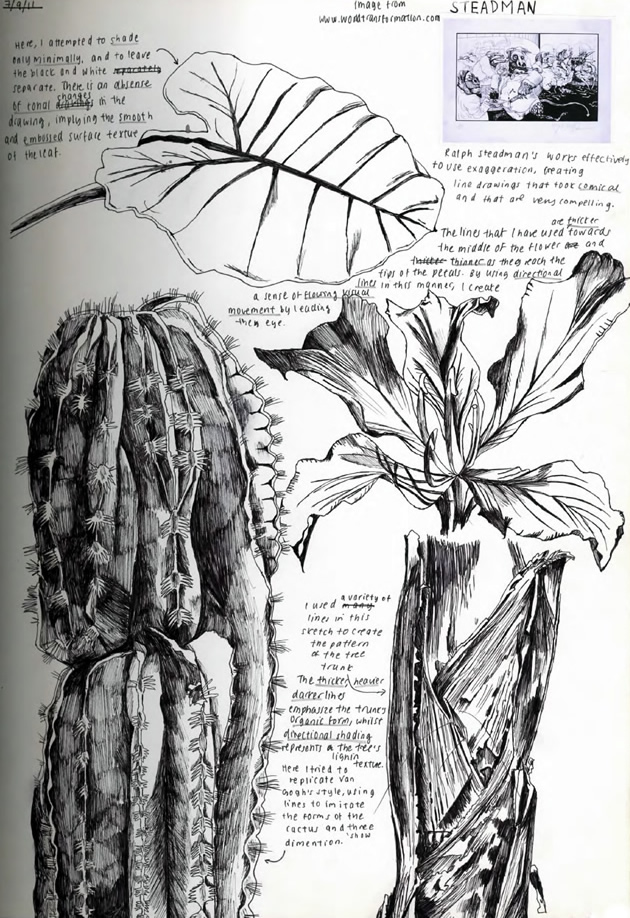 observational drawing of plants