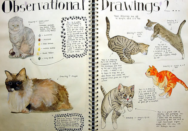 Observational drawings of cats